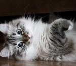 Кормление кошек готовыми кормами