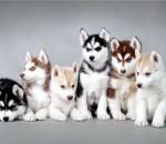 Витамины и минеральные добавки для щенка
