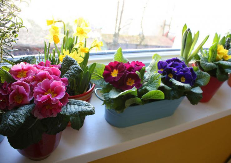 Пересаживаем цветы