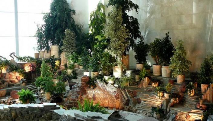 Растения – «хранители».