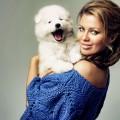 Как выбрать средство от блох и клещей для собак