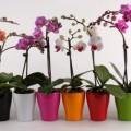 Уход-за-орхидеей